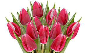 Large Bunch Of Tulips. Royalty Free Stock Image - Image: 8932276
