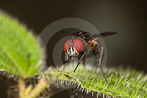 Fly On Green Leaf Stock Images - Image: 8933624