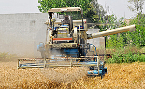 Wheat Harvesting Royalty Free Stock Images - Image: 8940519