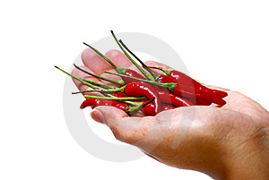 Spicy Series 2 Stock Image - Image: 8940781