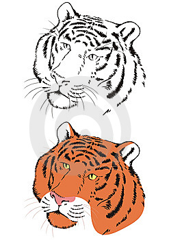 Tiger Royalty Free Stock Images - Image: 8941329
