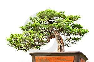 Bonsai Royalty Free Stock Image - Image: 8944666