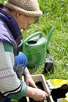 Gardening. Stock Photo - Image: 8947670