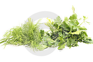 Parsley Stock Image - Image: 8950481