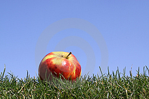 Apple In Grass Stock Images - Image: 8954634