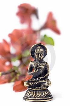 Buddah Kwiatów Odosobniona Czerwień Fotografia Royalty Free - Obraz: 8956667