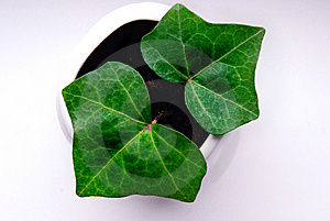 Green Plant In Vase Royalty Free Stock Photos - Image: 8957428