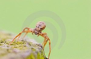 Spider Stock Image - Image: 8959821