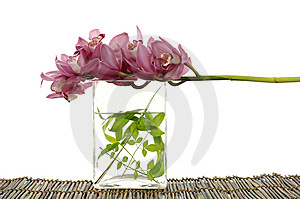 Beautiful Orchid Royalty Free Stock Images - Image: 8966829
