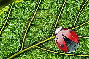 Ladybug Stock Photo - Image: 8967550