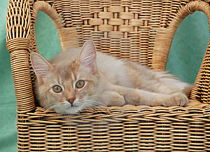 Cat Relaxing On A Wicker Chair Stock Photos - Image: 8973683