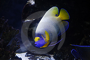 Tropical Fish Stock Photography - Image: 8976352