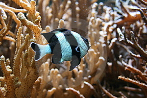 Tropical Fish Stock Image - Image: 8979771