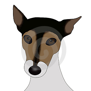 Jack Russell Stock Images - Image: 8980404
