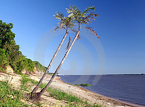 Amazon River Stock Photos - Image: 8981323