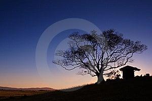 Tree Silhouette Sunset Royalty Free Stock Photo - Image: 8984505