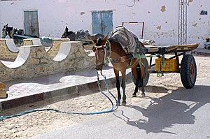 Donkey Royalty Free Stock Image - Image: 8986866