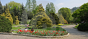 Rose Garden 6 Royalty Free Stock Photography - Image: 8987977