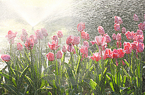 Tulips Royalty Free Stock Photos - Image: 8988388