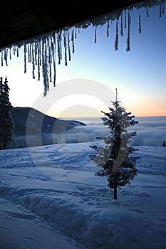 Lonely Tree Royalty Free Stock Photo - Image: 8990745
