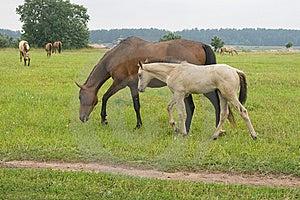 Paard Met Haar Veulen Stock Fotografie - Afbeelding: 8994052