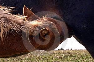 Foal Stock Photo - Image: 8998350