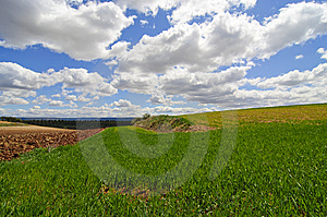 A Wheat Field. Royalty Free Stock Photos - Image: 8998538