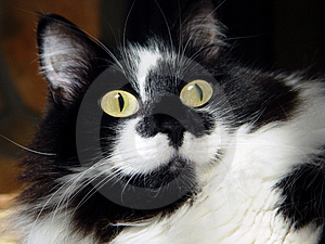 Google observent Kitty Image libre de droits