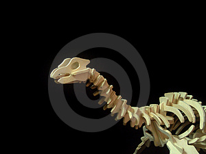 Dinosur Borns Study Stock Photography