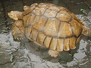 Tortoise Free Stock Image