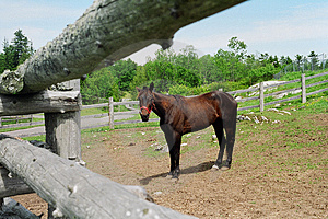 Horse And Fence Free Stock Image