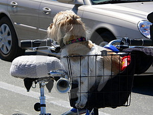 Uninterested Dog In Basket Stock Image
