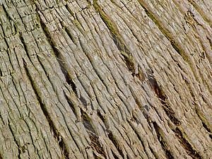 Trunk Lines Royalty Free Stock Images
