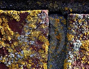 Closeup Of Bricks With Moss Stock Image