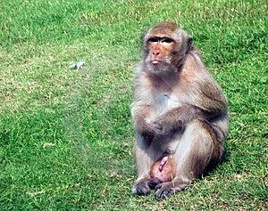 Monkey Free Stock Photos