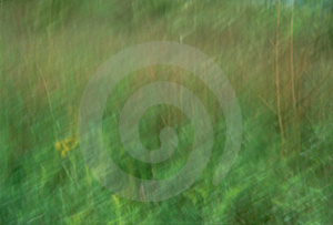 Streaked Grass Stock Photo
