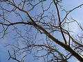 Tree On A Blue Sky Stock Photo