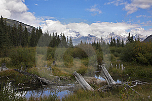 Bog In Mountains And Snags Stock Photo - Image: 9000350