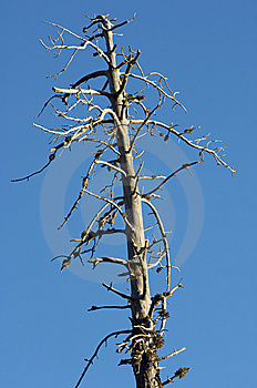Dead Tree Stock Image - Image: 9002391