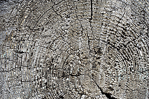Background An Old Tree Royalty Free Stock Photo - Image: 9006205