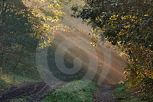 Forest With Sunrays Stock Image - Image: 9016641