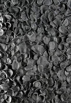Shells Royalty Free Stock Photo - Image: 9017595
