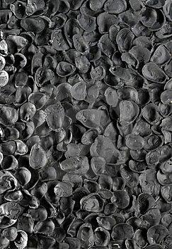 Shells Royalty Free Stock Photo - Image: 9017595