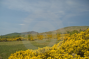 The Golden Hills Of Scotland Royalty Free Stock Photo - Image: 9017875