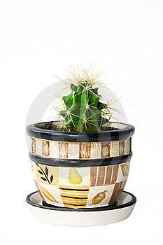 Kaktus Obraz Royalty Free - Obraz: 9019166