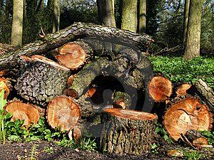 Logs In Woodland Royalty Free Stock Image - Image: 9021896
