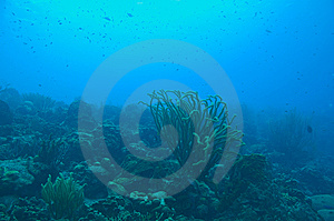 Seascape With Variety Of Coral And Blue Water Royalty Free Stock Photo - Image: 9024435