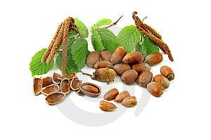 Hazelnuts Stock Images - Image: 9030804