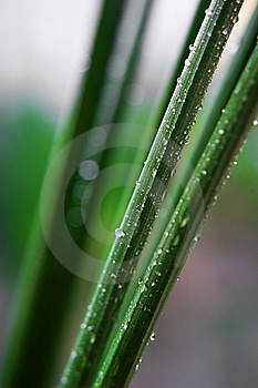 Fresh Greeb Grass Royalty Free Stock Images - Image: 9032029