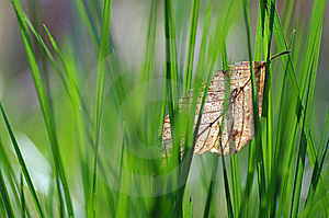 Spring Grass And Autumn Leaf Royalty Free Stock Image - Image: 9033796